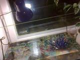 Продаю аквариум+ черепаха
